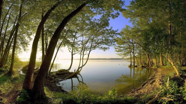 fond-ecran-nature-paysages-forets-217